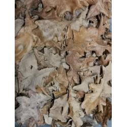 feuilles de chêne NANO